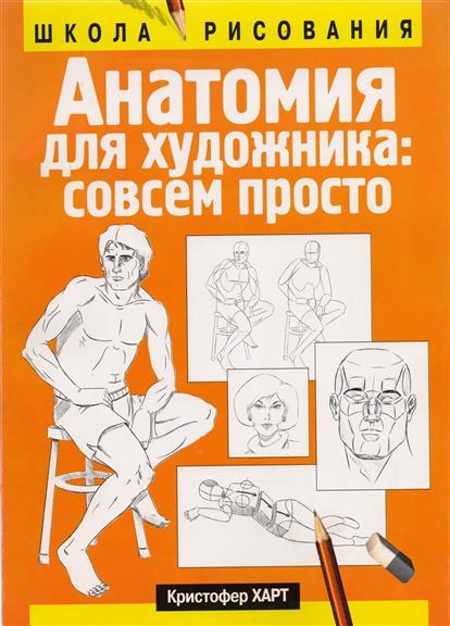 Анатомия для художника совсем просто